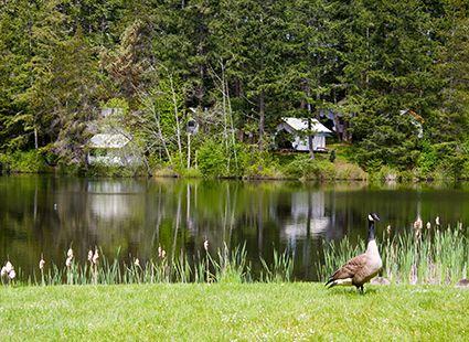 goose on Neva lake