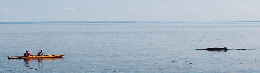 Whale Watching on San Juan Island
