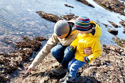 Man and son looking at shells on a rocky shore