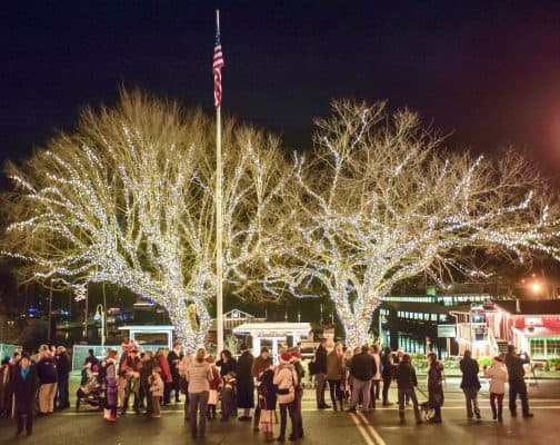 Crowd of people standing by two trees covered in white Christmas lights