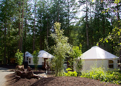 exterior with 3 yurts at 420