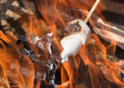 1280 marshmallow roasting