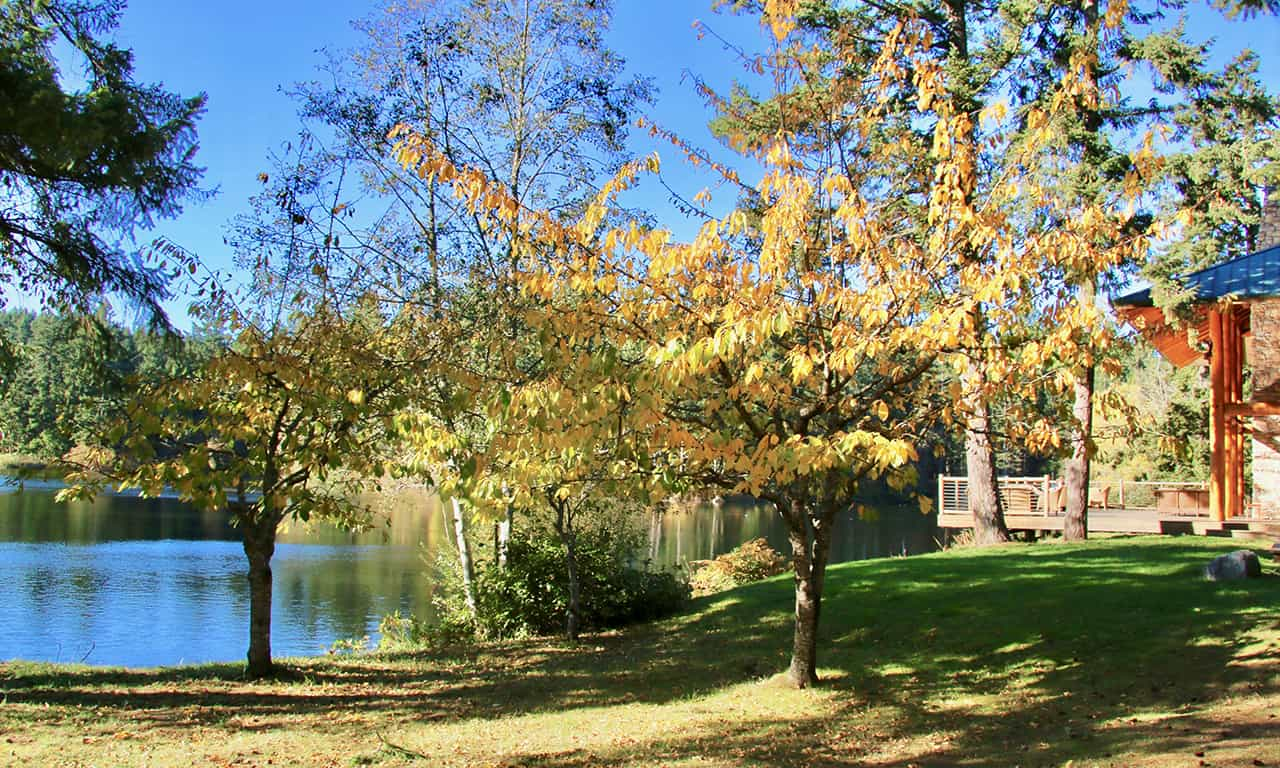 1280 fall trees and lodge side view