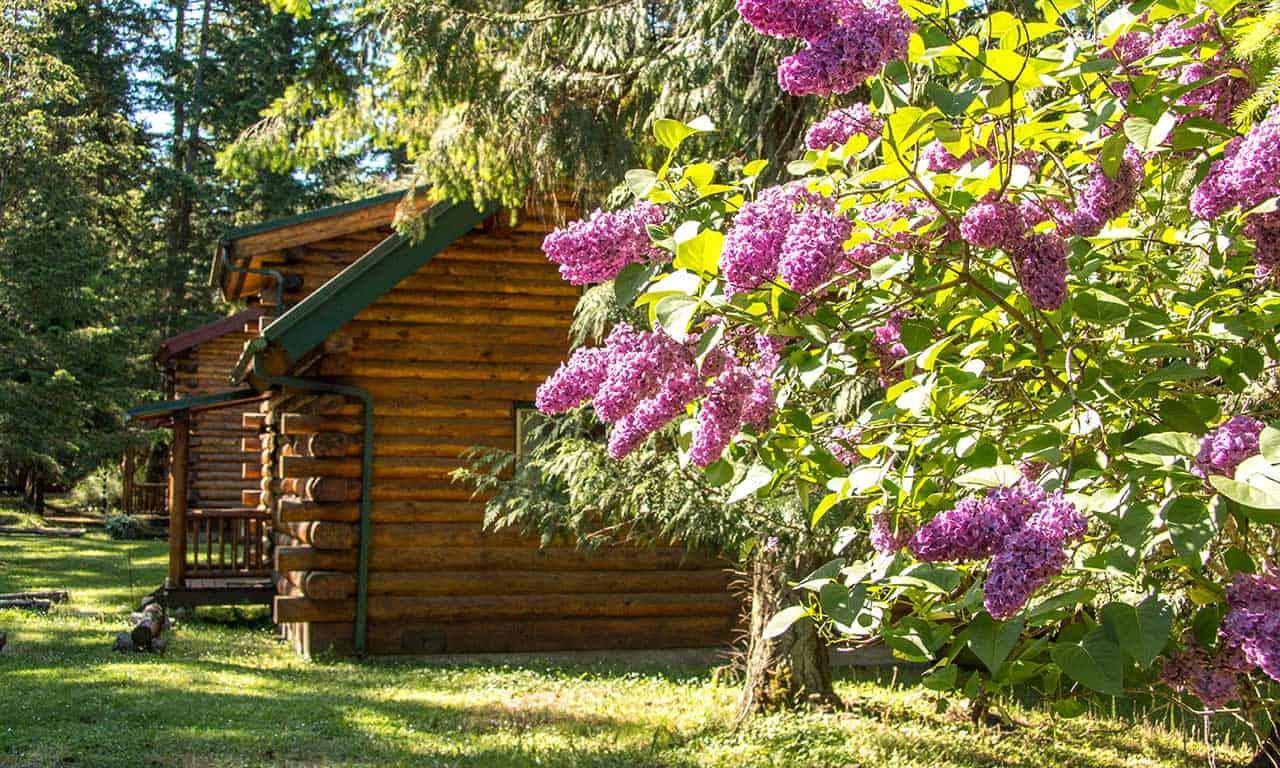 LOg cabin at Lakedale