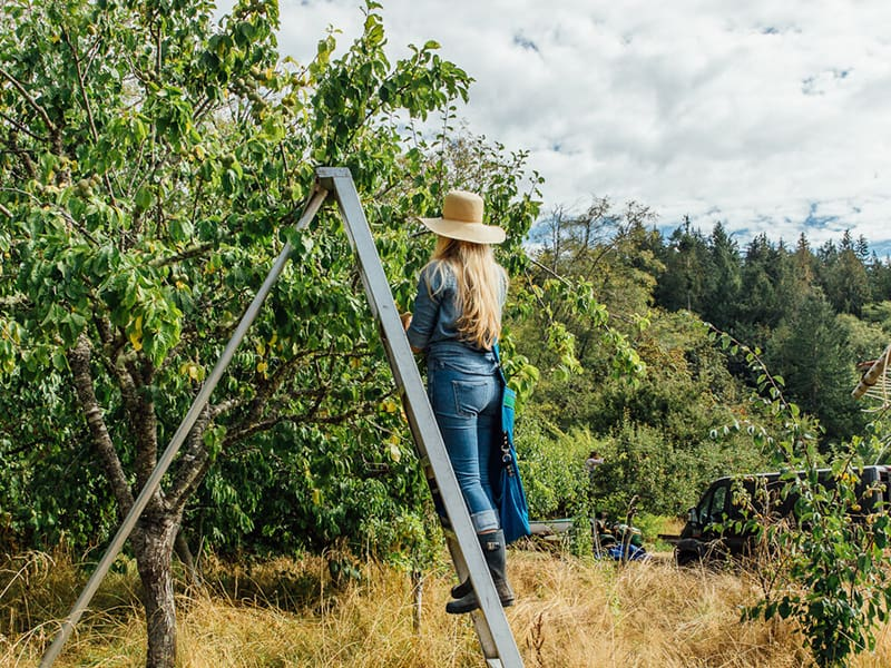 Girl Meets Dirt in orchard picking fruit