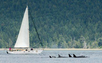 San Juan Island Whale Watching Tours
