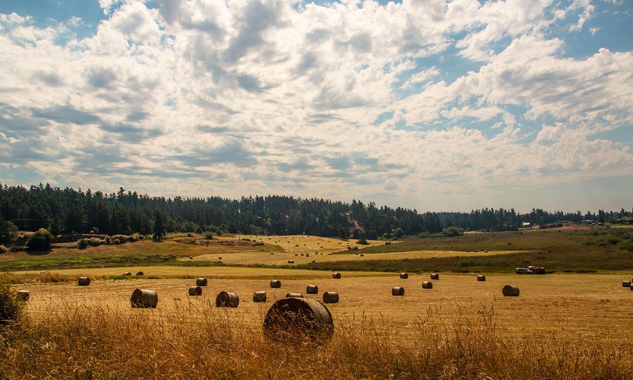 hay bales in field on San Juan Island