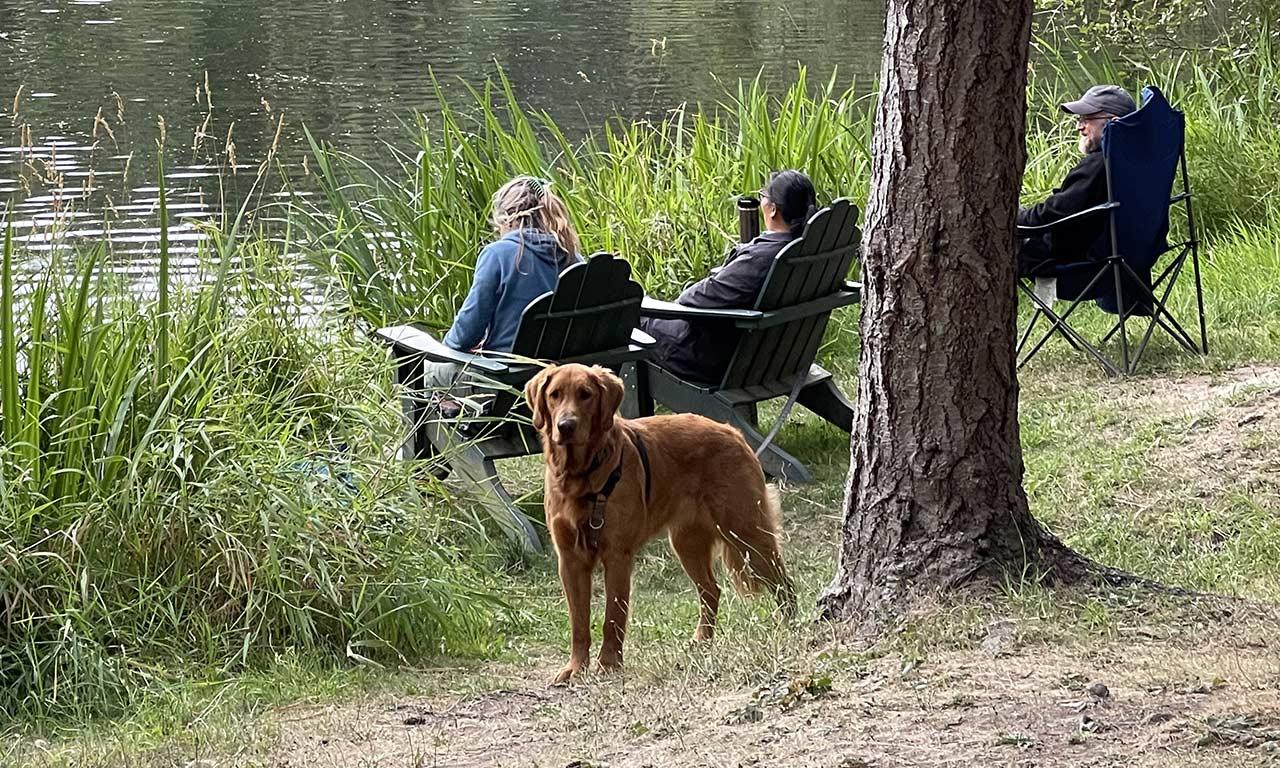dog at lake at Lakedale campground
